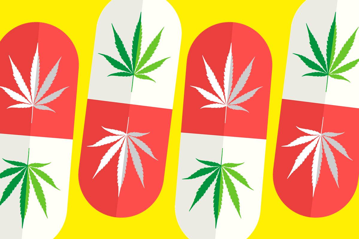 Potencjał Marihuany Medycznej, Narkus