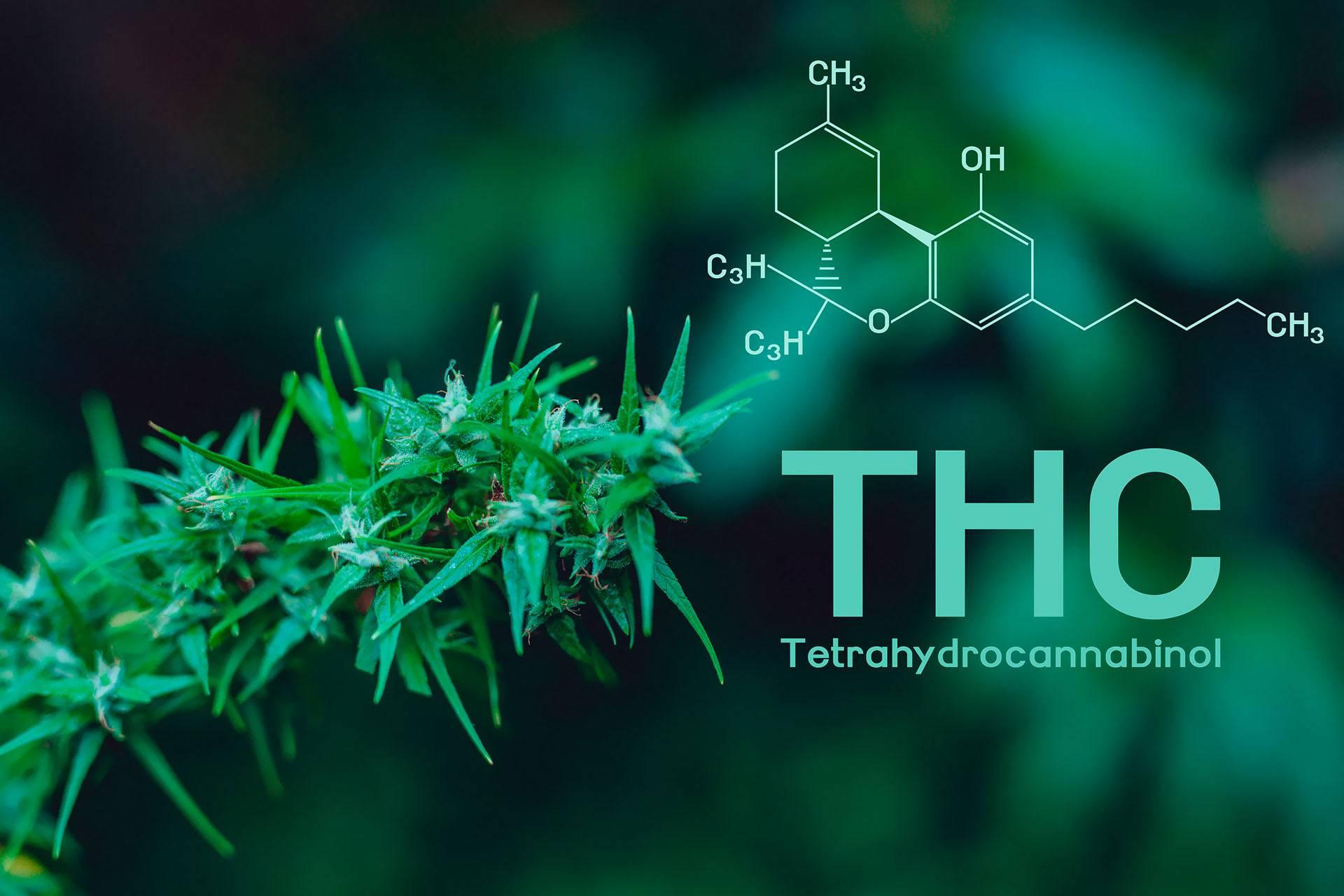 Zbyt Duża Ilość THC, Narkus